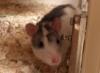 ratzenfratz userpic