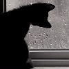 Kitten watching rain