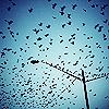 telephone pole birds