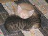 котята, мордашка