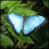 butterfly  ive just bought a