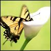 shy_simplicity userpic