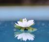 happylit userpic