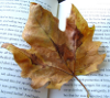 Leaf on Book