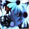 green_lands userpic