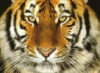 evgeni_sned userpic