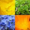 цветы и цвета