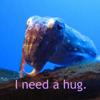 cuttlefish needs cuddles