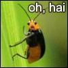 oh hai bug
