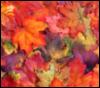 autumnamelie userpic