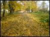 осеннее-дорога