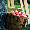 Tarja: Apple basket