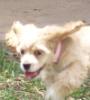 maggie, running