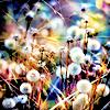 taraxacum.officinalis [userpic]