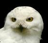 owl_cut_you userpic