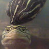 turtlekisses userpic