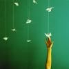 a piteousness of doves