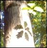 chernidar