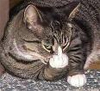 thecaffeinecat userpic