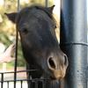 любопытная лошадь