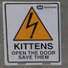 Sarcasticia Nitpickerson: kittens