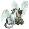 angelcats