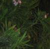 nightt userpic