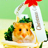 Holiday: Christmas Hamster