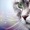 кошка серый