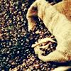 rejvenel userpic