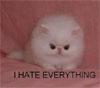 cat of hatred