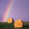 rainbowfield