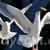 flyseagull userpic