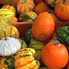 Cheezey: Fall Pumpkins and Gourds