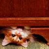 shadowsong_13: Animals - Kitty peek-a-boo