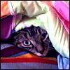 Spike: Basic - Caturday