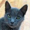 asheycat