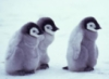 pinguinita userpic