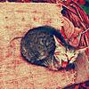 Dana: kitteh