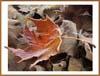 осень на носу