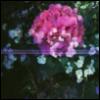 softraindrops userpic