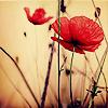 primus_sile userpic