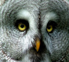 owl_being userpic