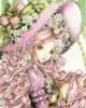 Pink Lady, Nao Tukiji illustration