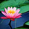 RD - Flower 01