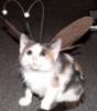 antennae cat