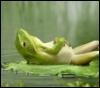 lazy frog, sleepy, tired