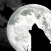 Howling By The Moon