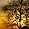 pat: NF evening tree