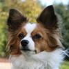 machgreyhound userpic